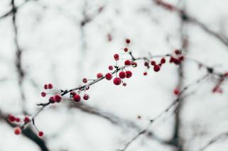 Cossyimages Winter (35).jpg