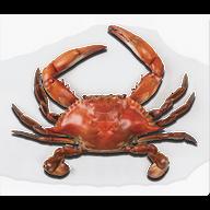 Crab PNGs