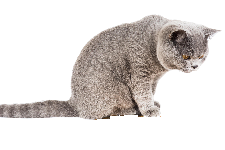 cat-1099697_Clip
