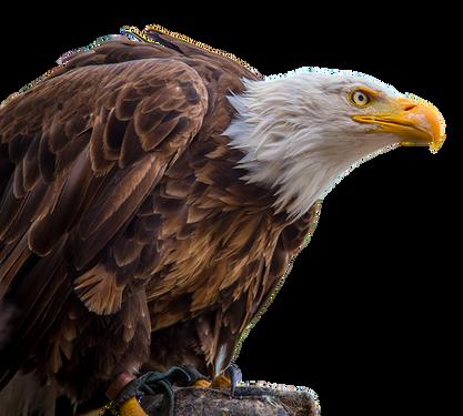 PNG images: eagle, flying, birds