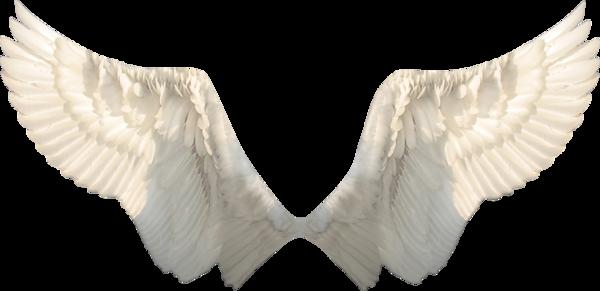 Wings-png-39