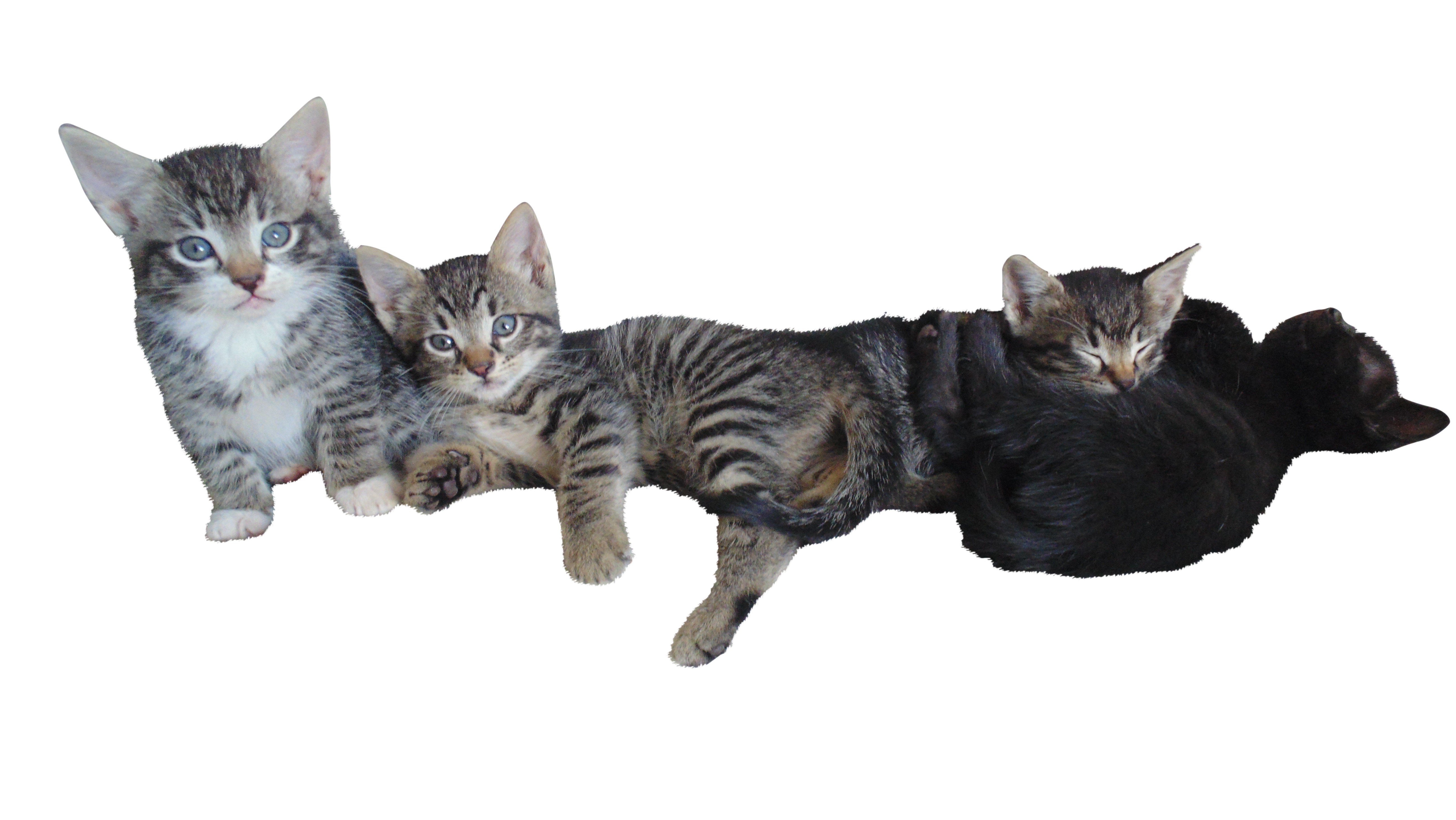 kittens-1075978_Clip