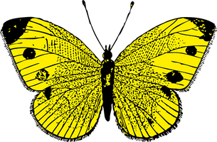 butterfly-37652__340.png