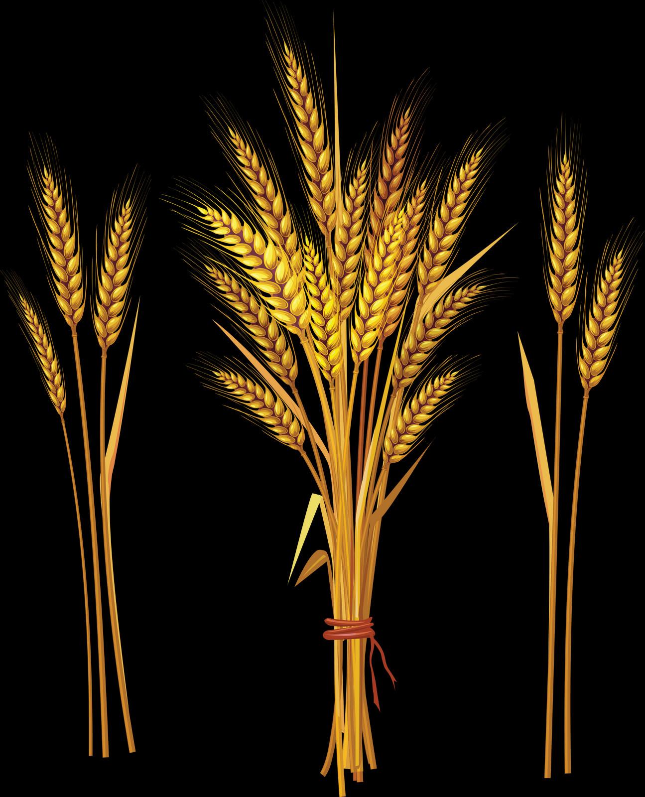 Картинки колосья пшеницы и ржи для детей, днем рождения
