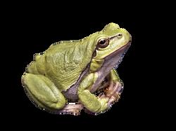 frog-111179_Clip