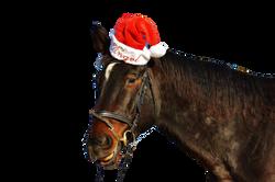 horse-1034429_Clip