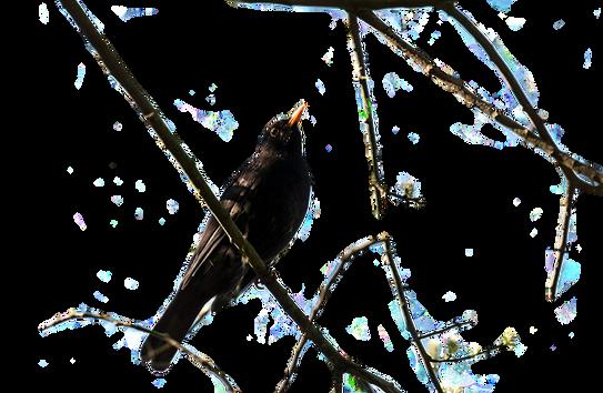 bird-3368232_960_720.png