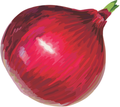 Download these free PNG images straight to your desktop today. we add hundreds for free PNGs weekly. Check out these onion images.