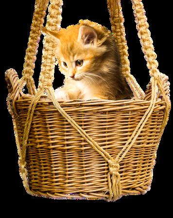 PNG images: cat, kitten, basket