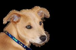 dog-574308_Clip