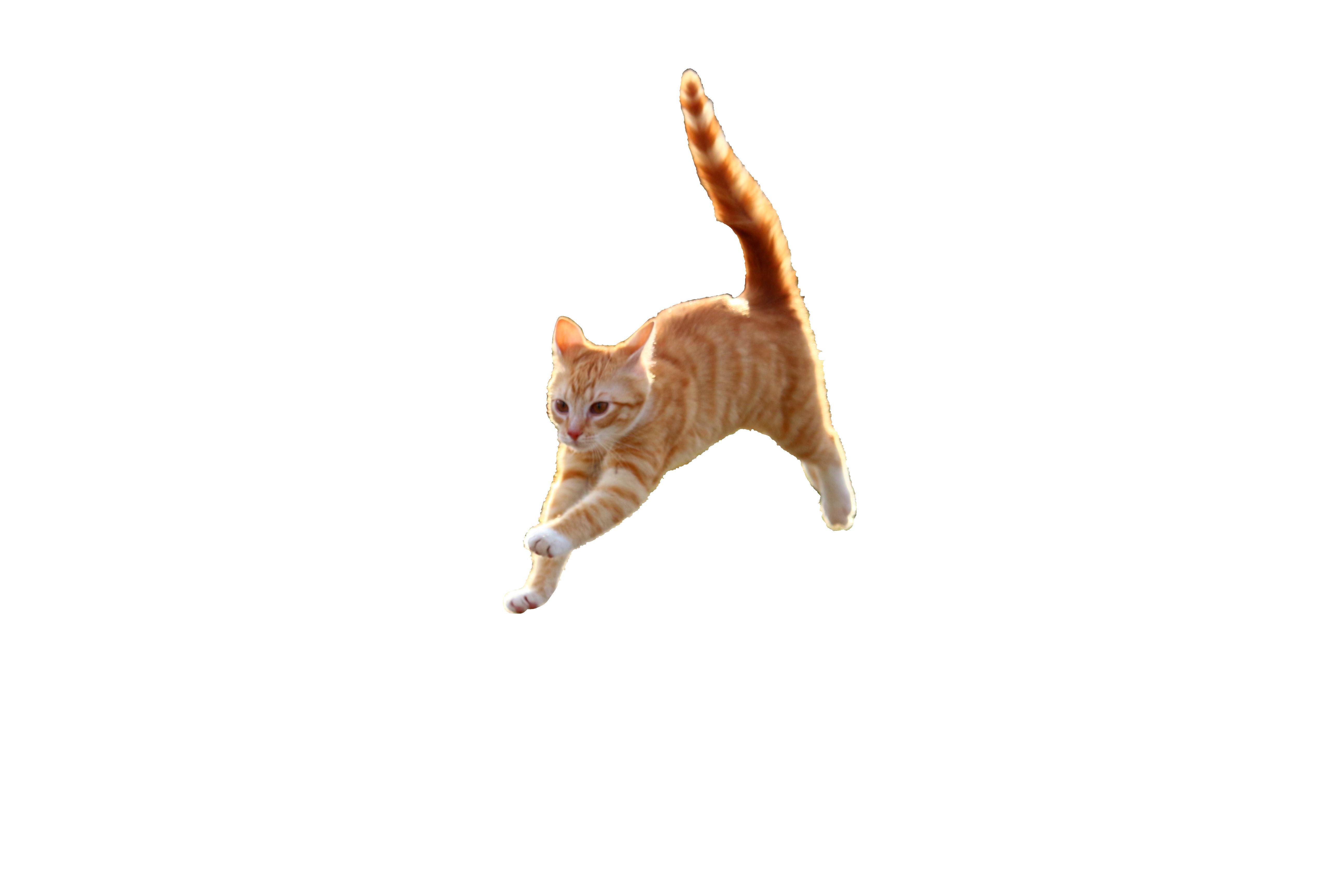 cat-1184727_Clip