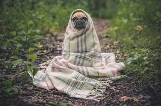Cossyimages Puppy (2).jpg