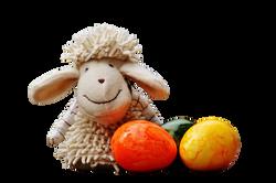sheep-1272810_Clip