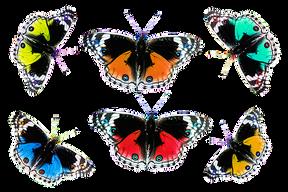 butterflies-1070353__340.png