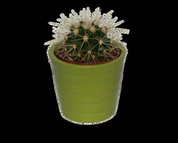 cactus-2758706_960_720.png