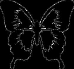 Anonymous_Architetto_--_Farfalla_02