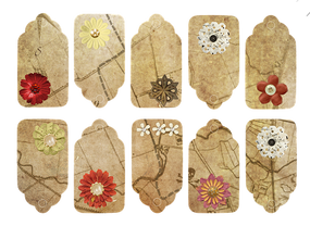 flower-1078232__340.png