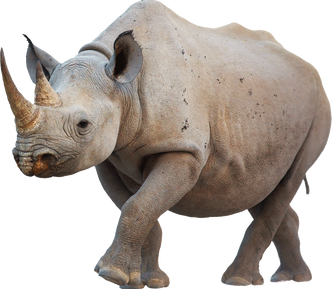 Complete animal free PNG collection, Free PNGs has tens of thousands of free transparent cutout PNG  images to download today.   - Top transparent PNG images. - Biggest PNG collection on the net.  - Unlimited downloads. - Check us out today. - Latest rhino PNG images.