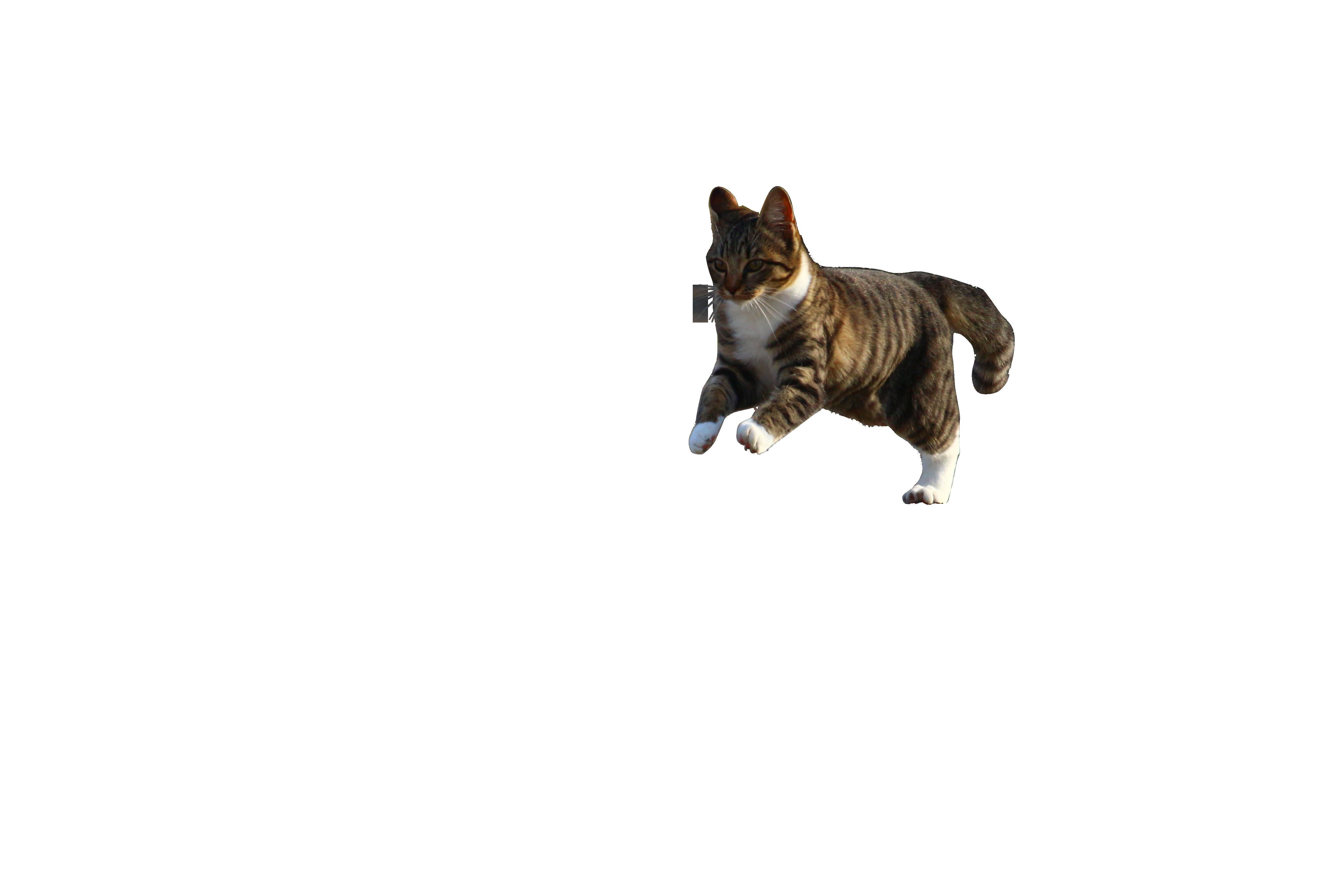 cat-1034090 (1)_Clip