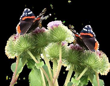 butterflies-2901132_960_720.png