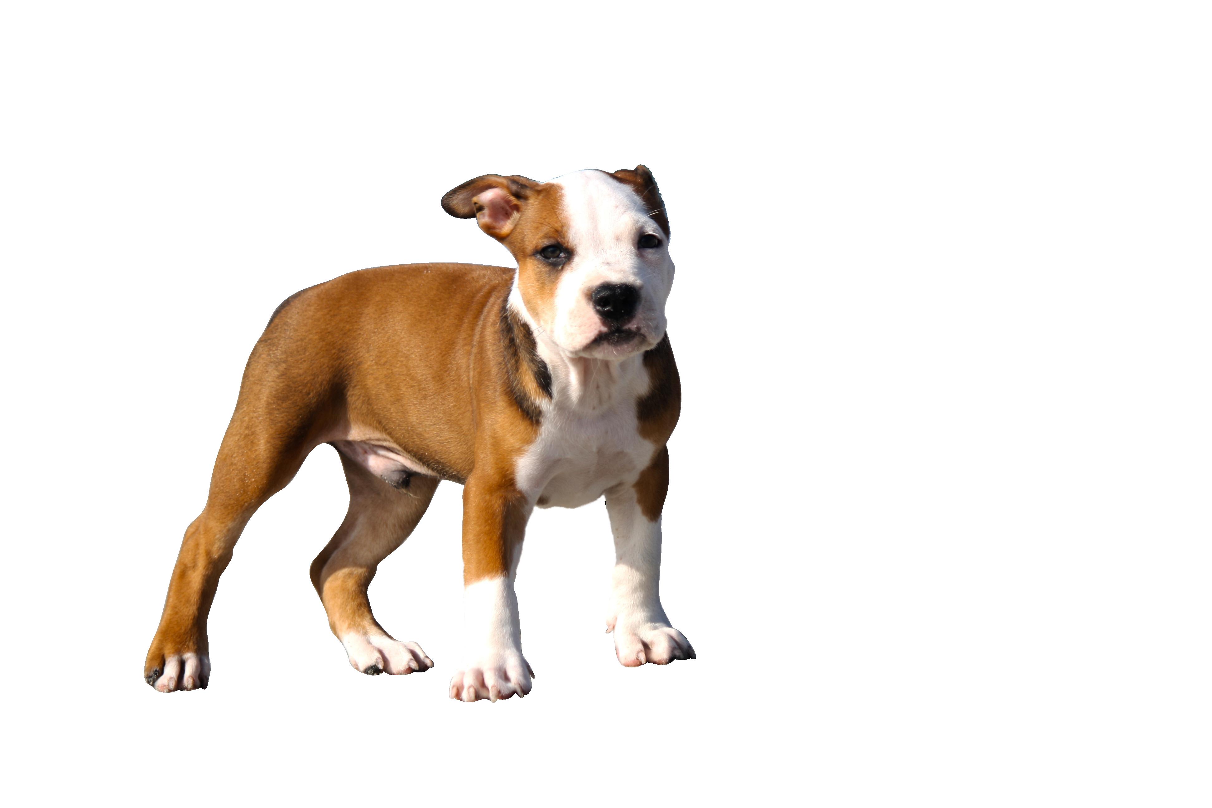 puppy-345334_Clip