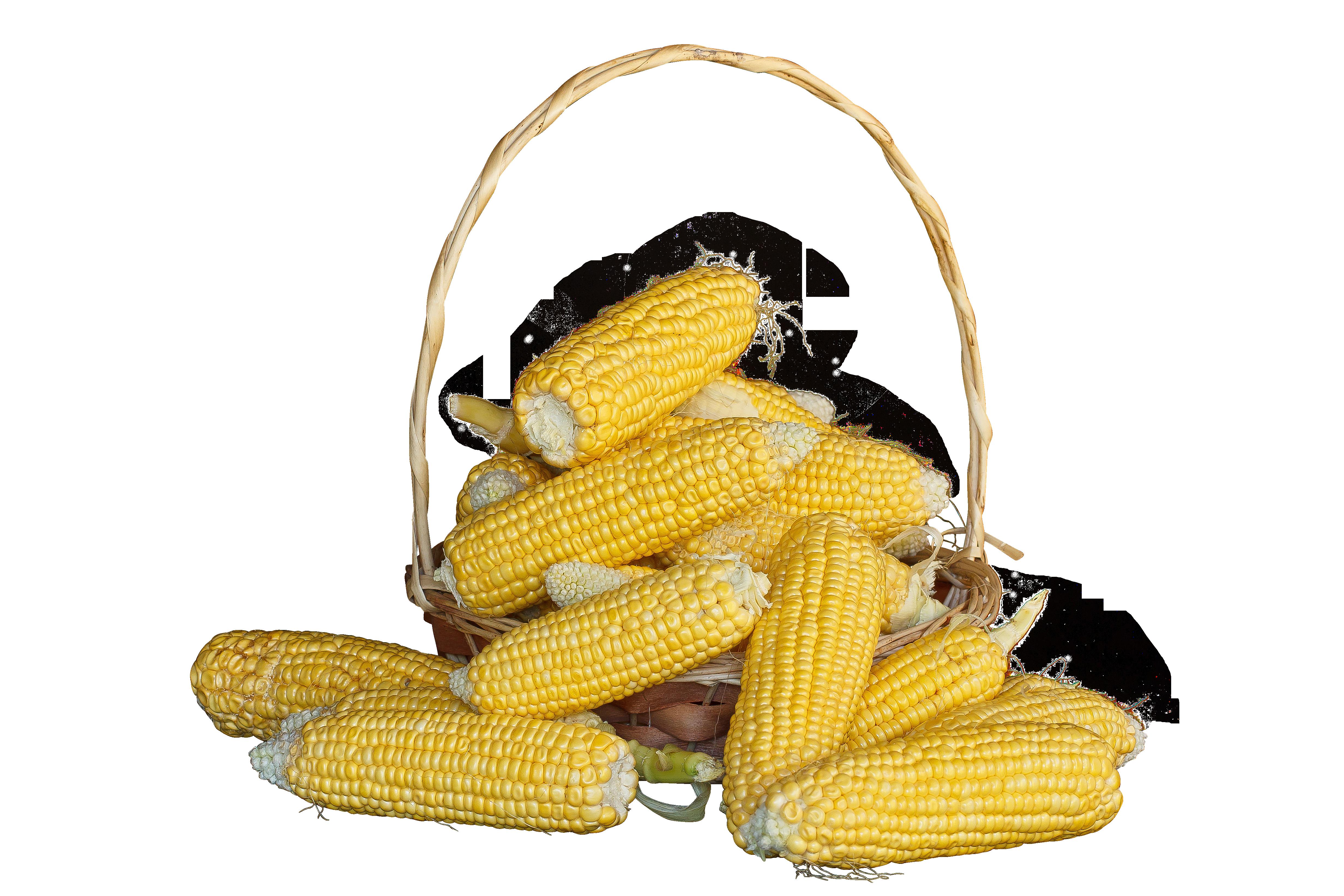 maize-380701_Clip