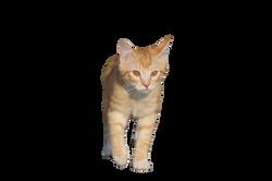 cat-1184953_Clip