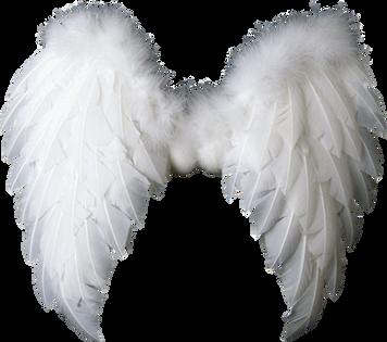Wings-png-36