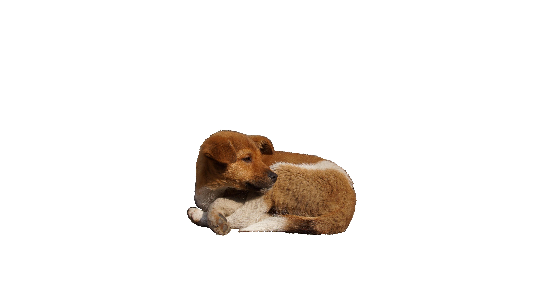 dog-1151195_Clip