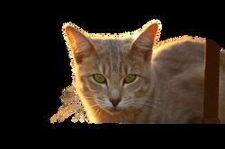 cat-1040879_Clip