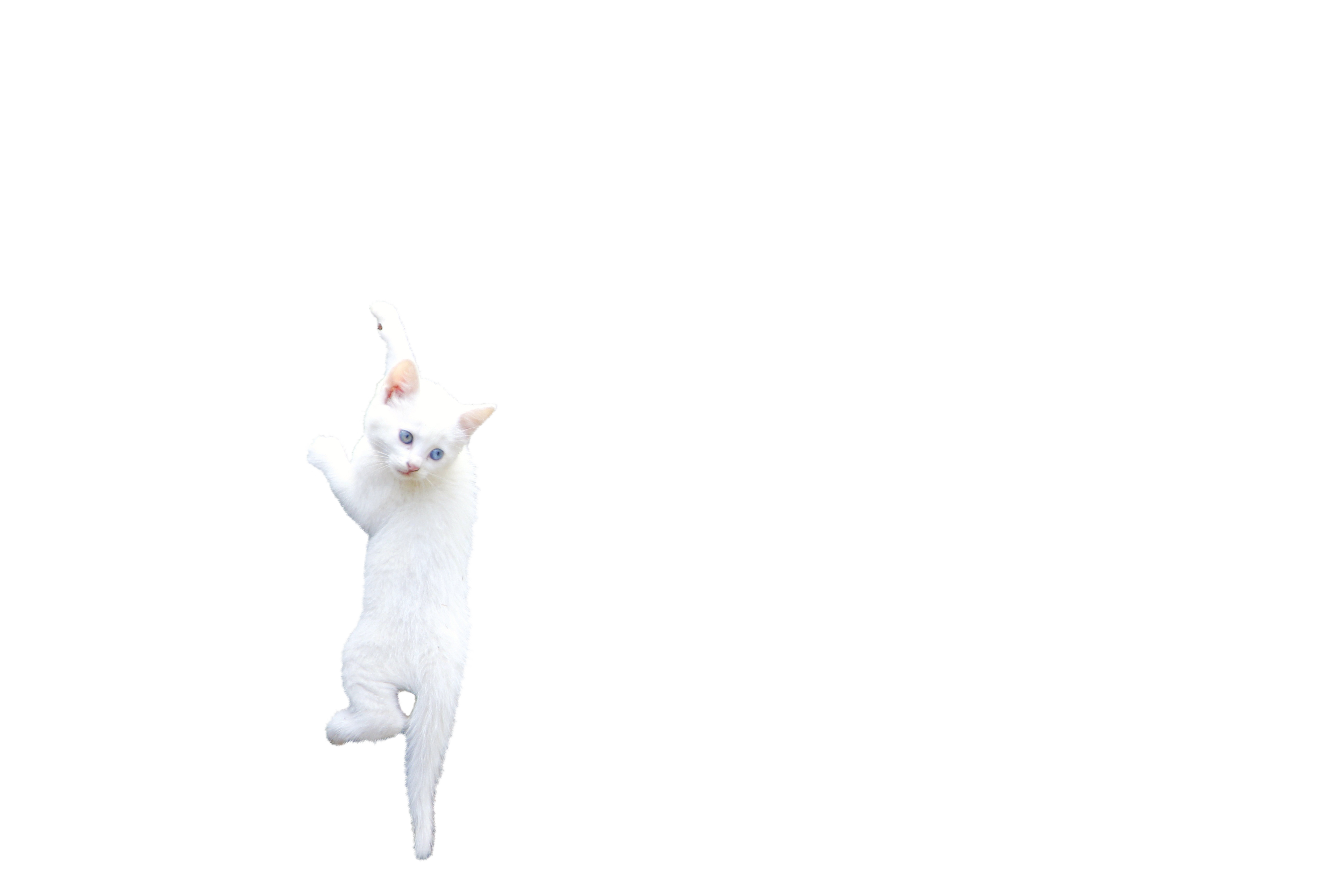 cat-1028287_Clip