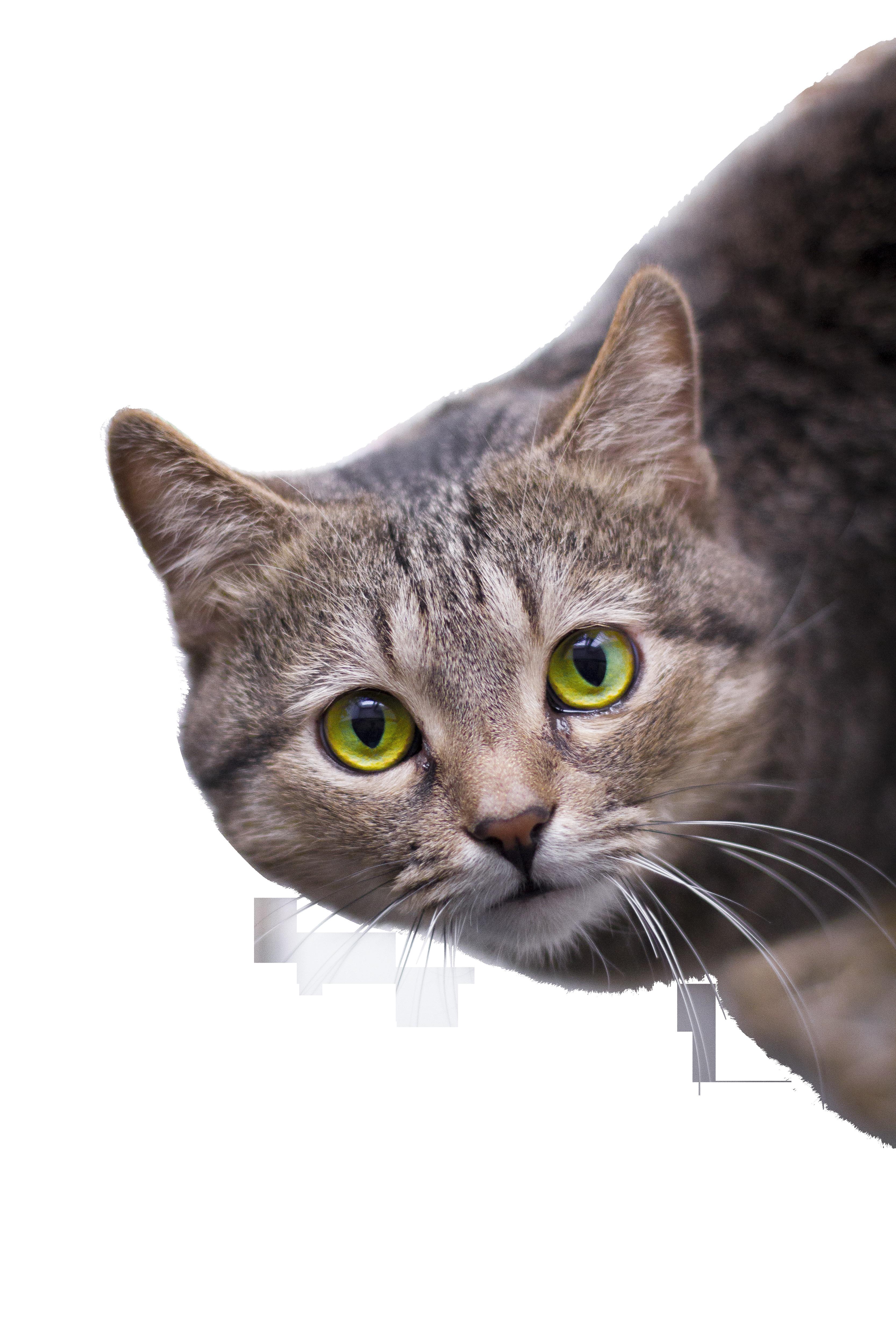 cat-1159540_Clip