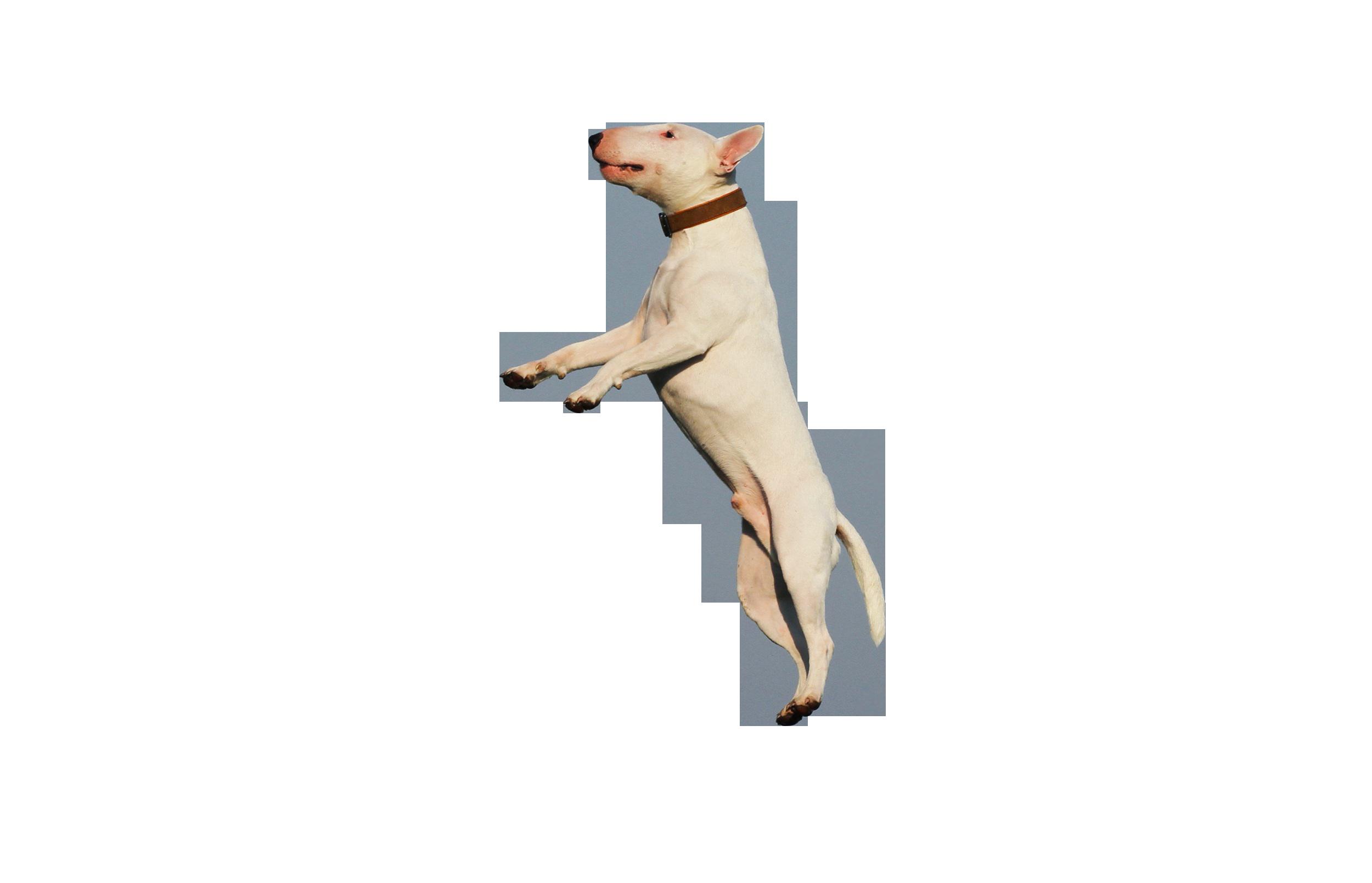 dog-1252071_Clip
