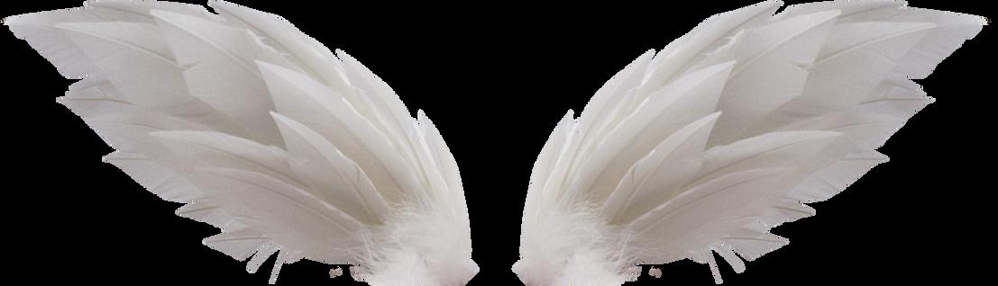 Wings-png-44