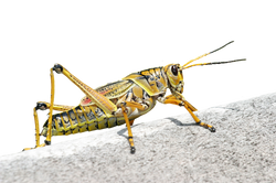PNG images Insects