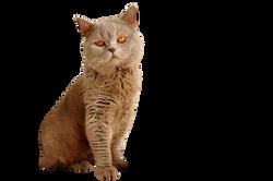 cat-1106804_Clip