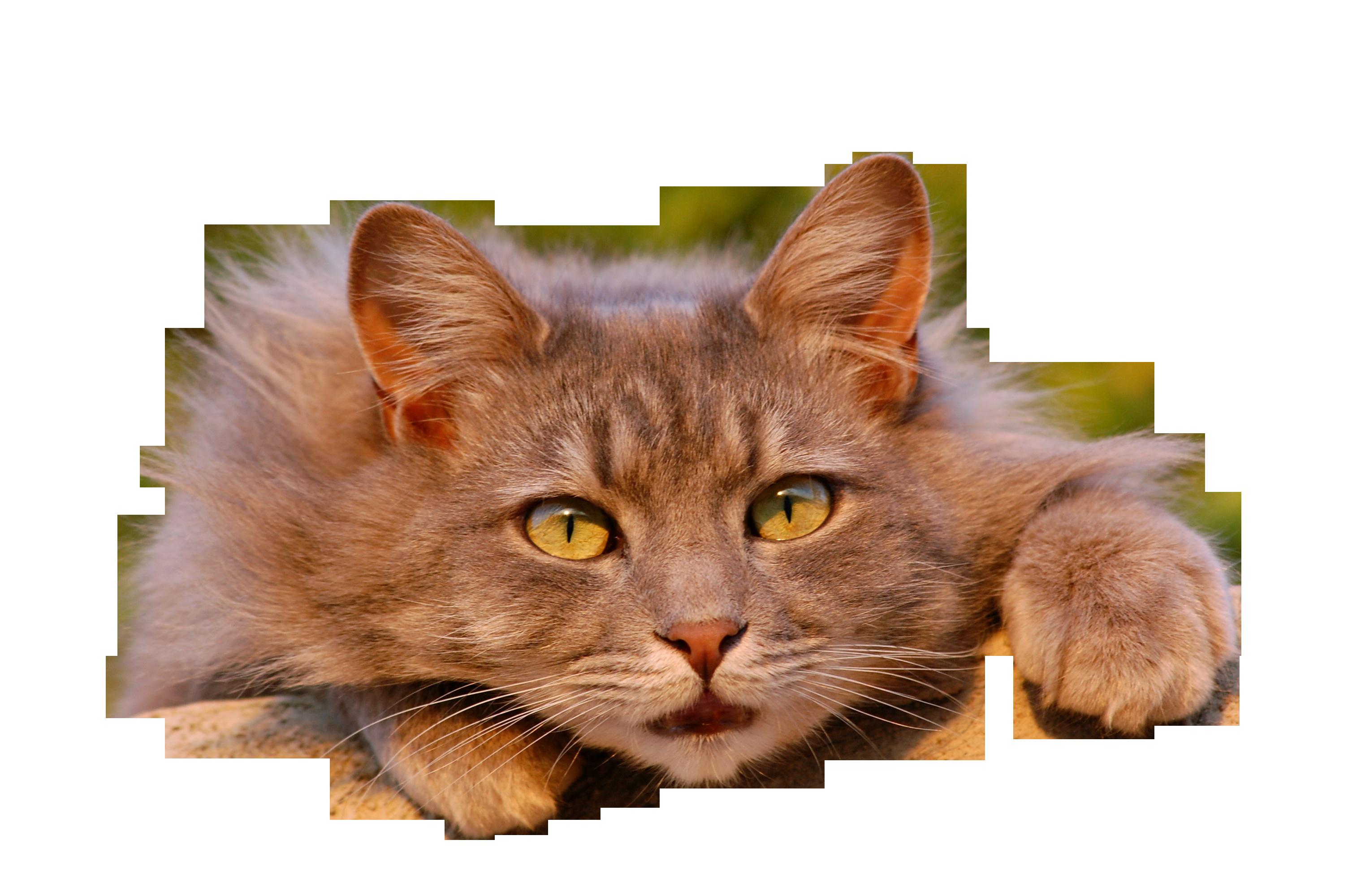 cat-401124_Clip