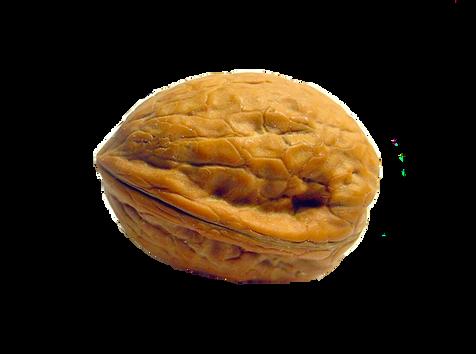 Walnut PNG