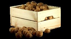 nuts-1213037_Clip