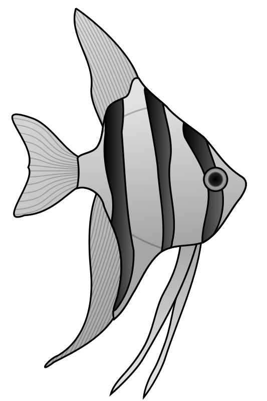altum_angelfish_01