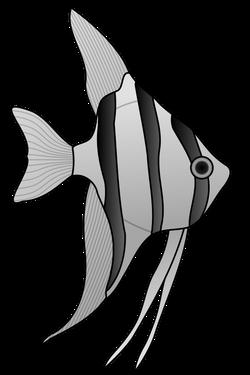 altum_angelfish_01