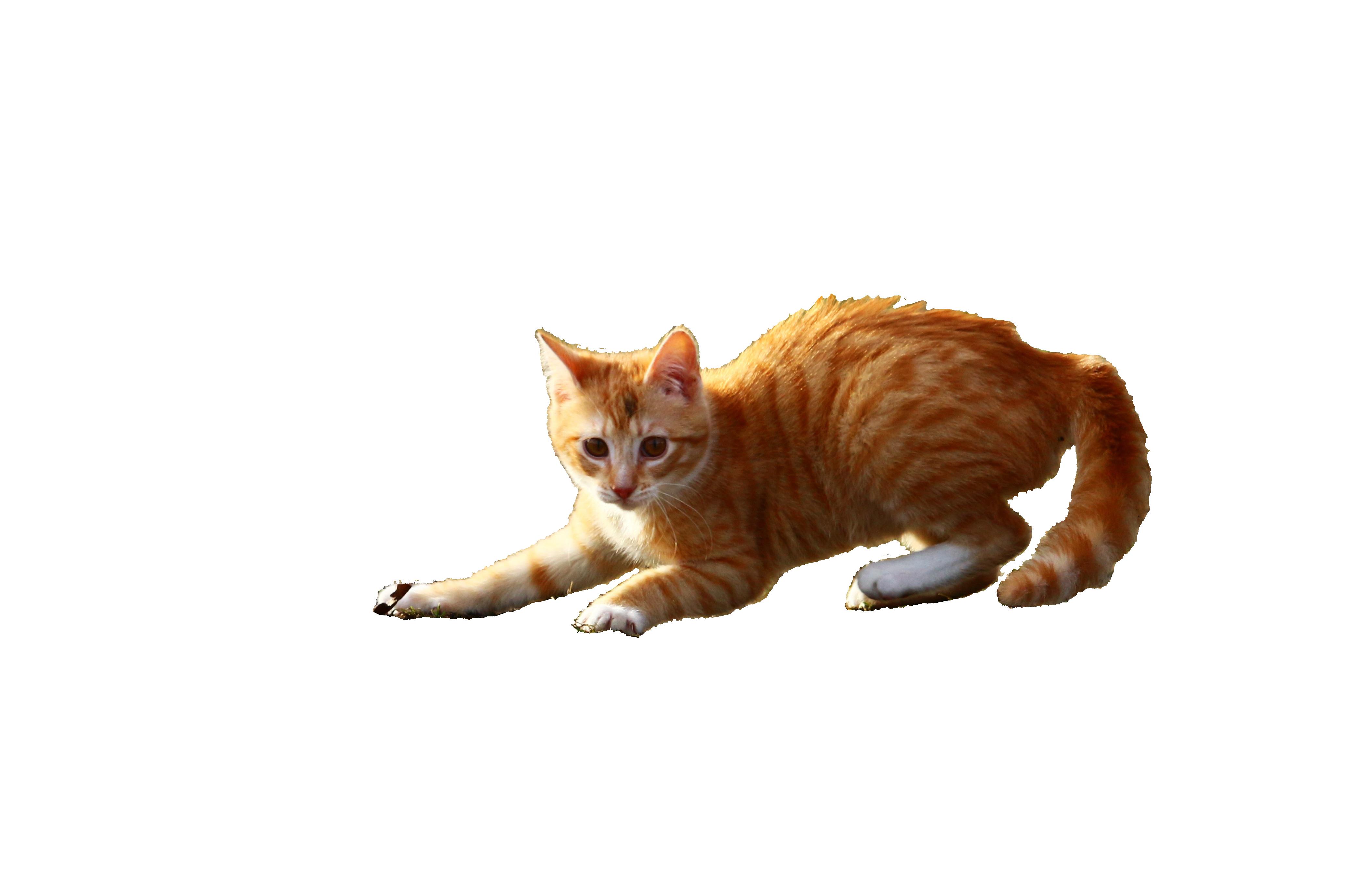 cat-1166158_Clip