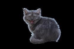 cat-665138_Clip