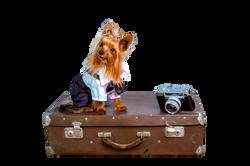 dog-1260935_Clip