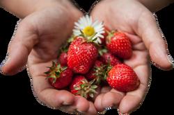 strawberry-1176410_Clip