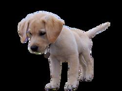 dog-954520_Clip