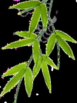 Bamboo (1).png