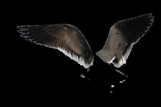 Wings-png-40