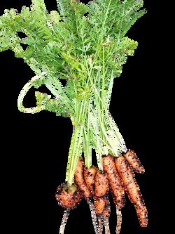vegetables-319705_Clip