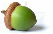 Acorn, free PNGs